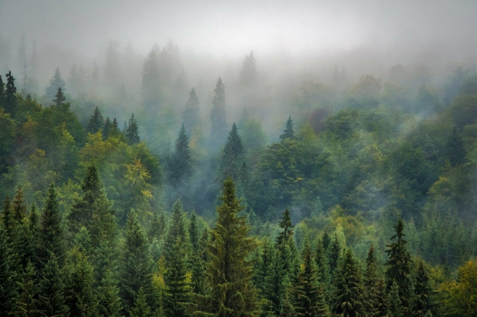 Wald im Nebeldunst