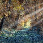 Wald mit Blättern